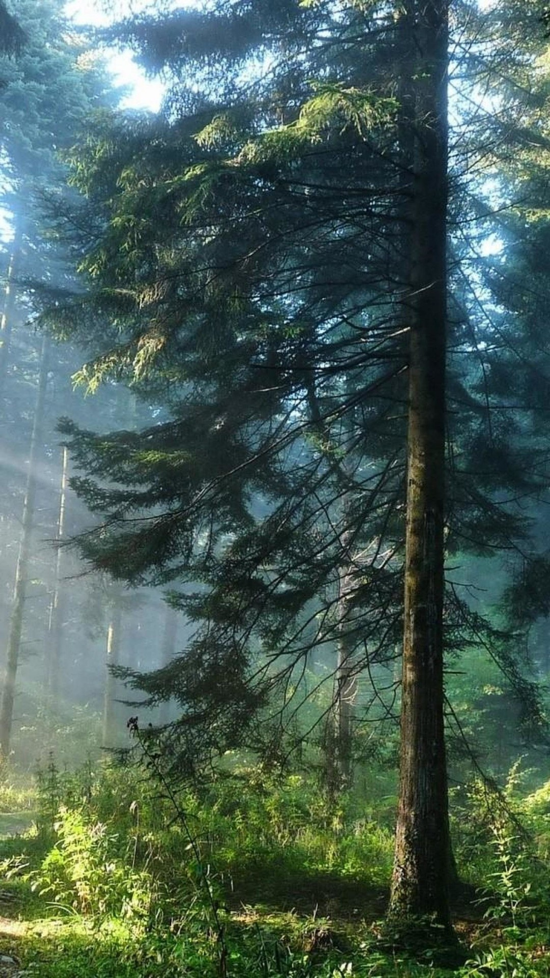 Forest HD Wallpapers f...
