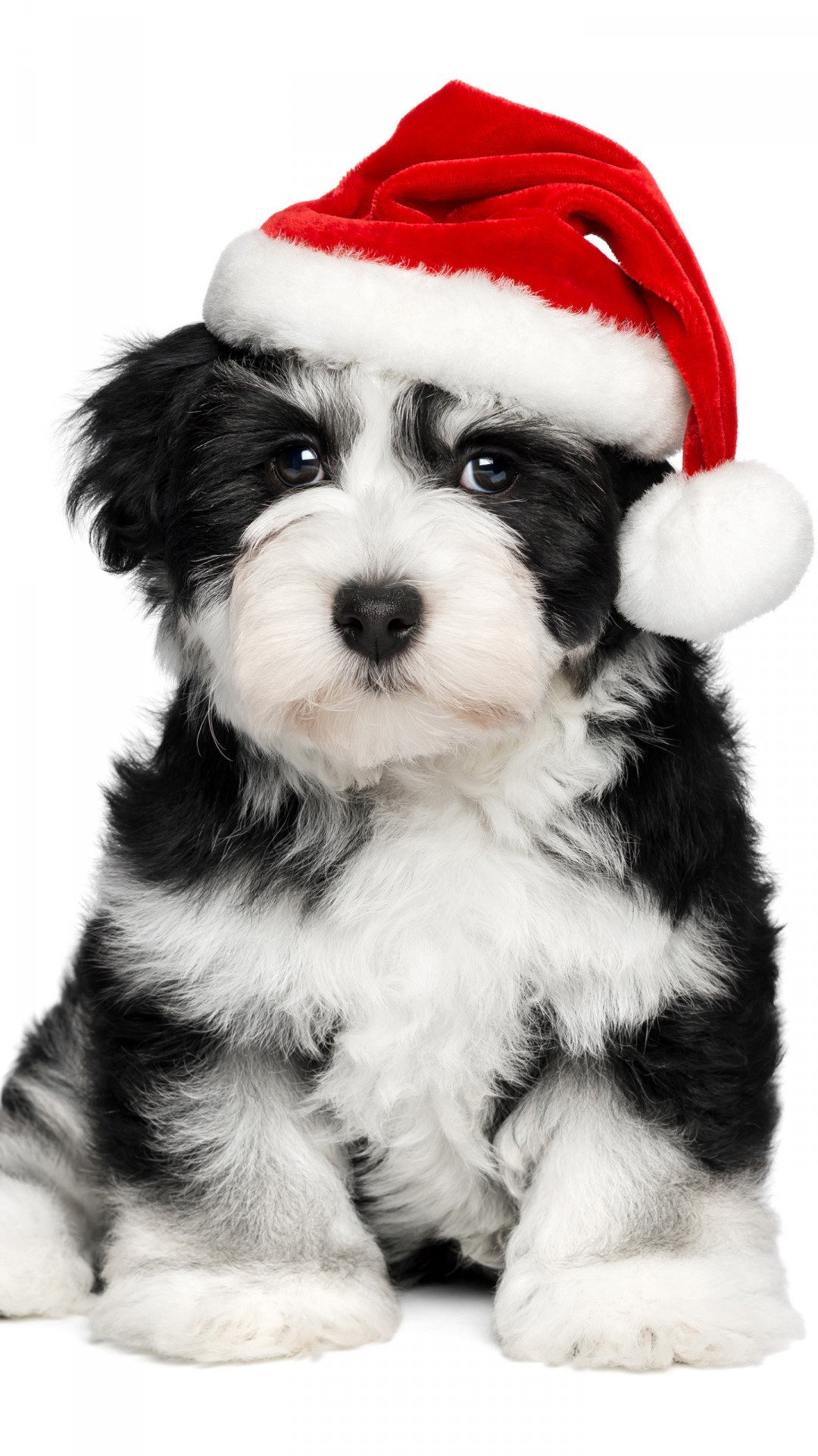 a christmas dog wallpaper background