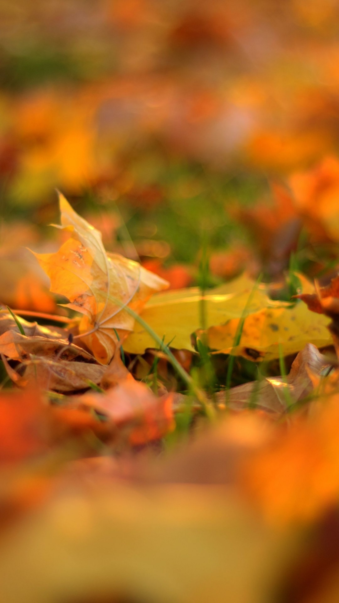 Autumn Hd Wallpapers For Xiaomi Redmi Note 3 Wallpapers Pictures