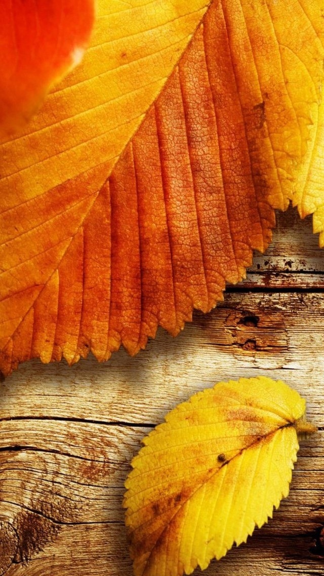 Autumn HD Wallpapers For IPhone SE