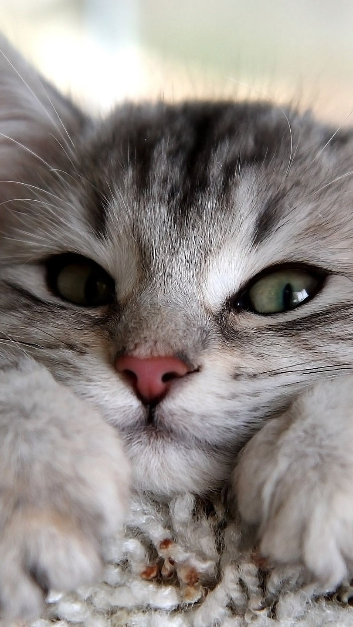 Cute Cats Hd Wallpapers For Lg G3 G4 Page 2 Wallpapers Pictures