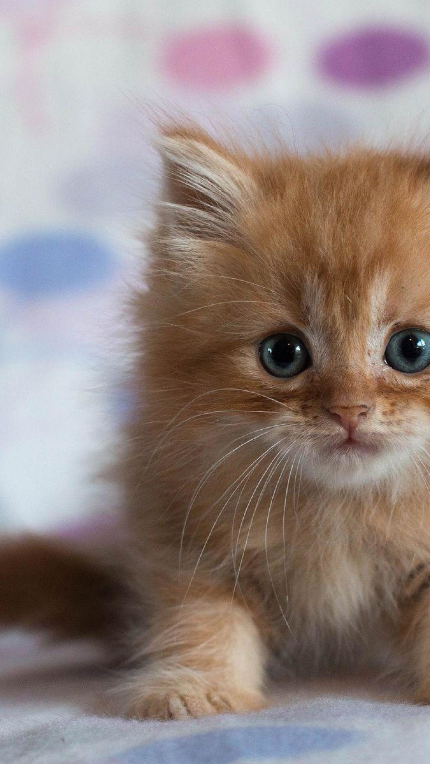 Cute Cats HD Wallpapers for Galaxy S7 | Wallpapers.Pictures