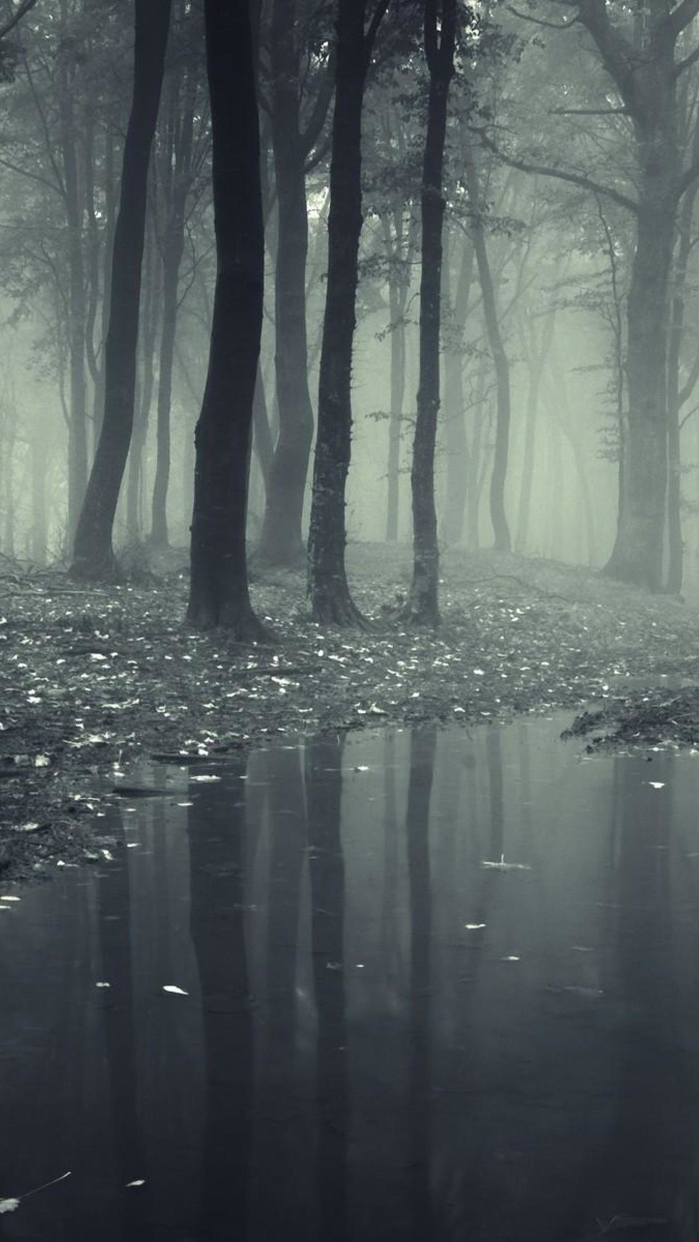 Best Wallpaper Galaxy White - black-and-white-forest-wallpaper-background-1440x2560  HD_803376 .jpg