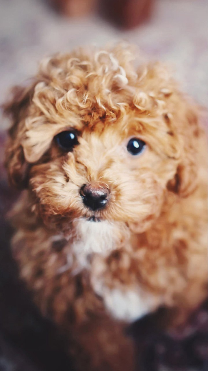 Cute Dogs Hd Wallpapers For Moto E Wallpapers Pictures