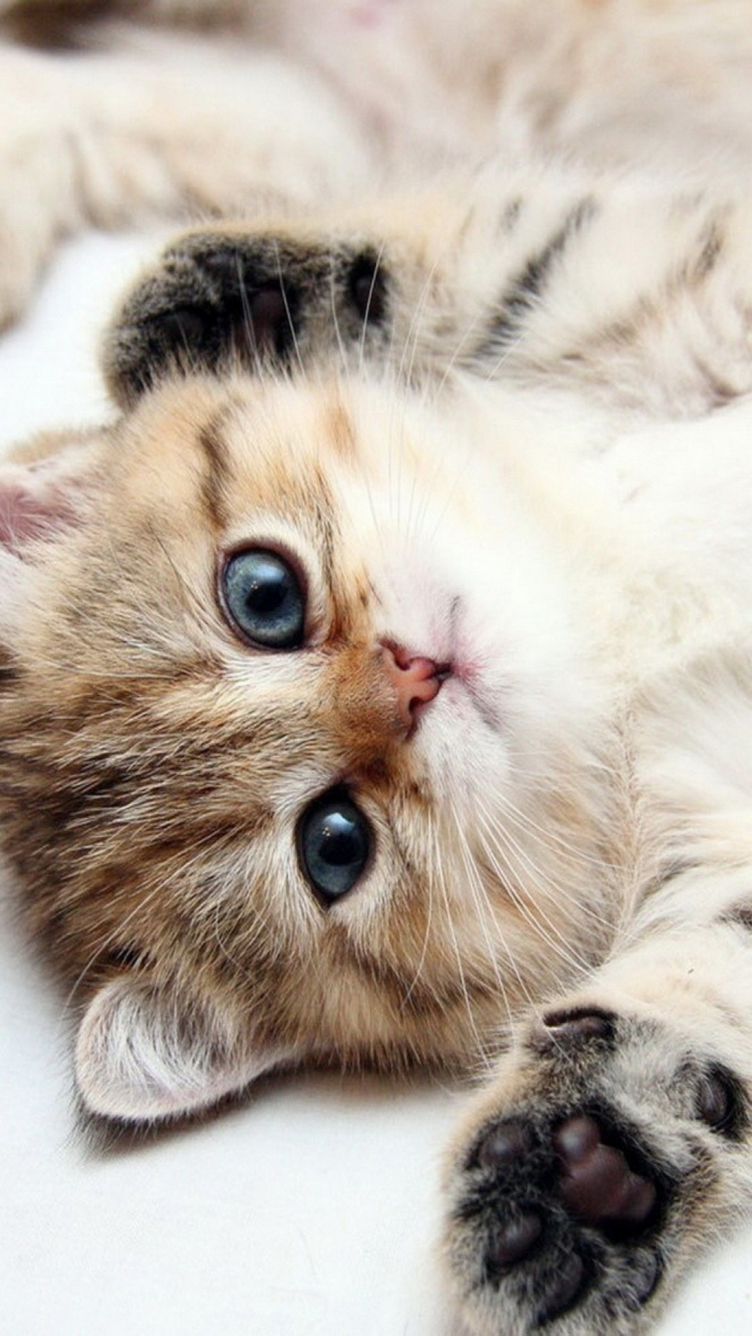 Cute Cats Hd Wallpapers For Sony Xperia Z6 Wallpapers Pictures