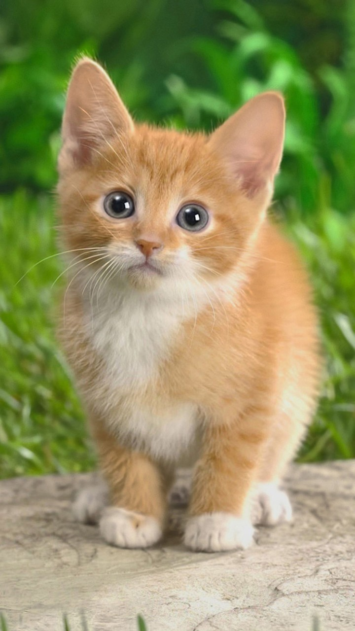 Cute Cats Hd Wallpapers For Galaxy J7 Wallpaperspictures
