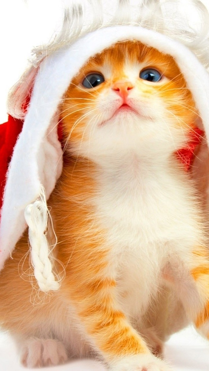 Cute Cats Hd Wallpapers For Moto G G2 Page 3 Wallpapers Pictures