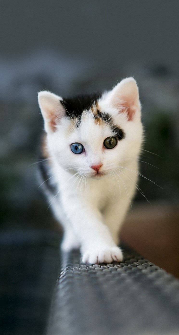 Cute Cats Hd Wallpapers For Iphone 5 5s 5c Page 4