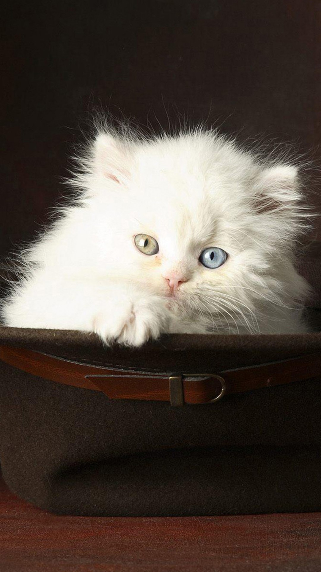 Cute Cats Hd Wallpapers For Iphone 6s Plus Page 2 Wallpapers