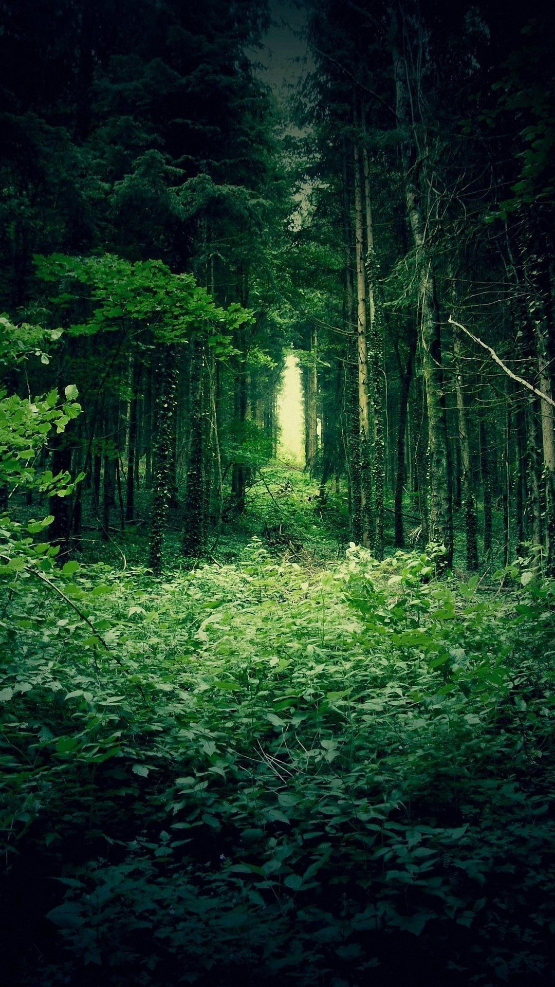 Cool Forest Backgrounds Deep