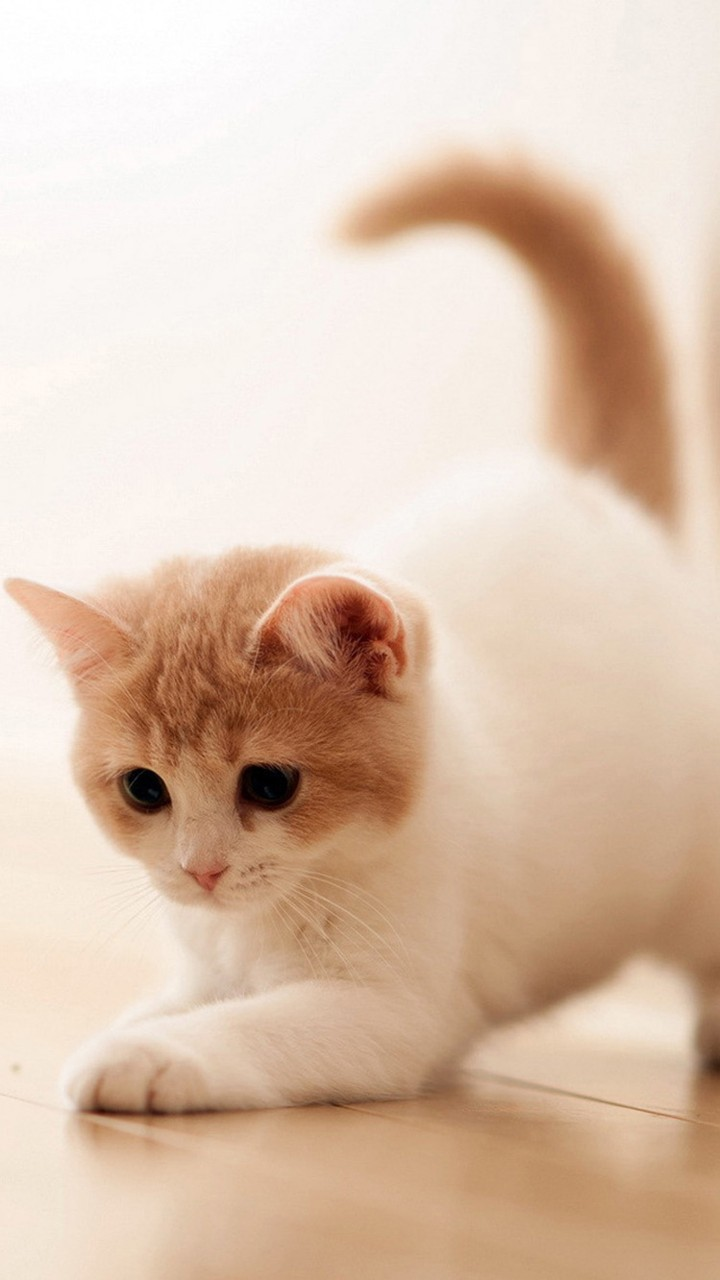 Cute Cats HD Wallpapers For Galaxy J7