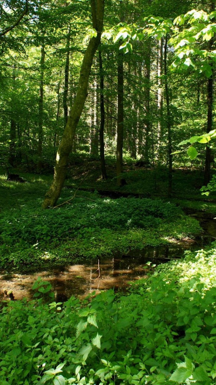 Forest Hd Wallpapers For Iphone 6 Wallpapers Pictures