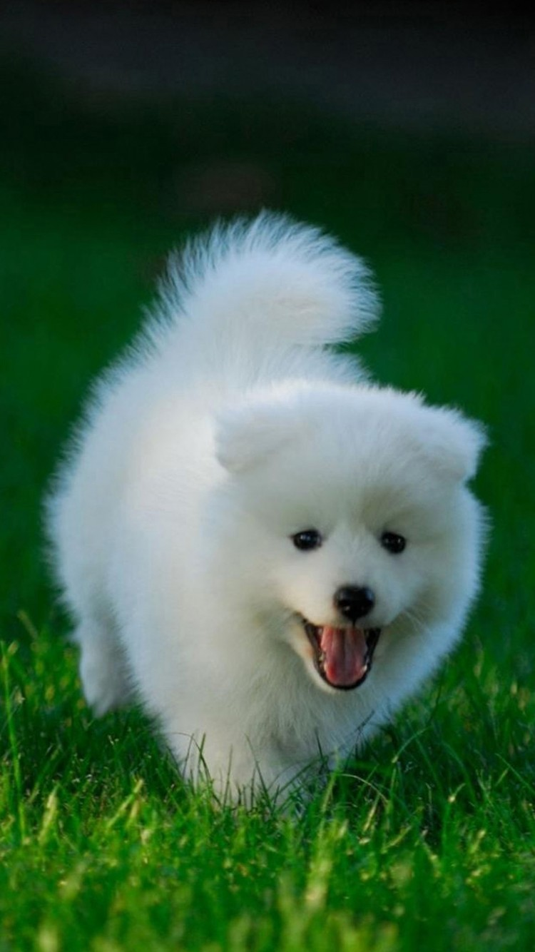 Cute Dogs Hd Wallpapers For Iphone 6 Wallpapers Pictures
