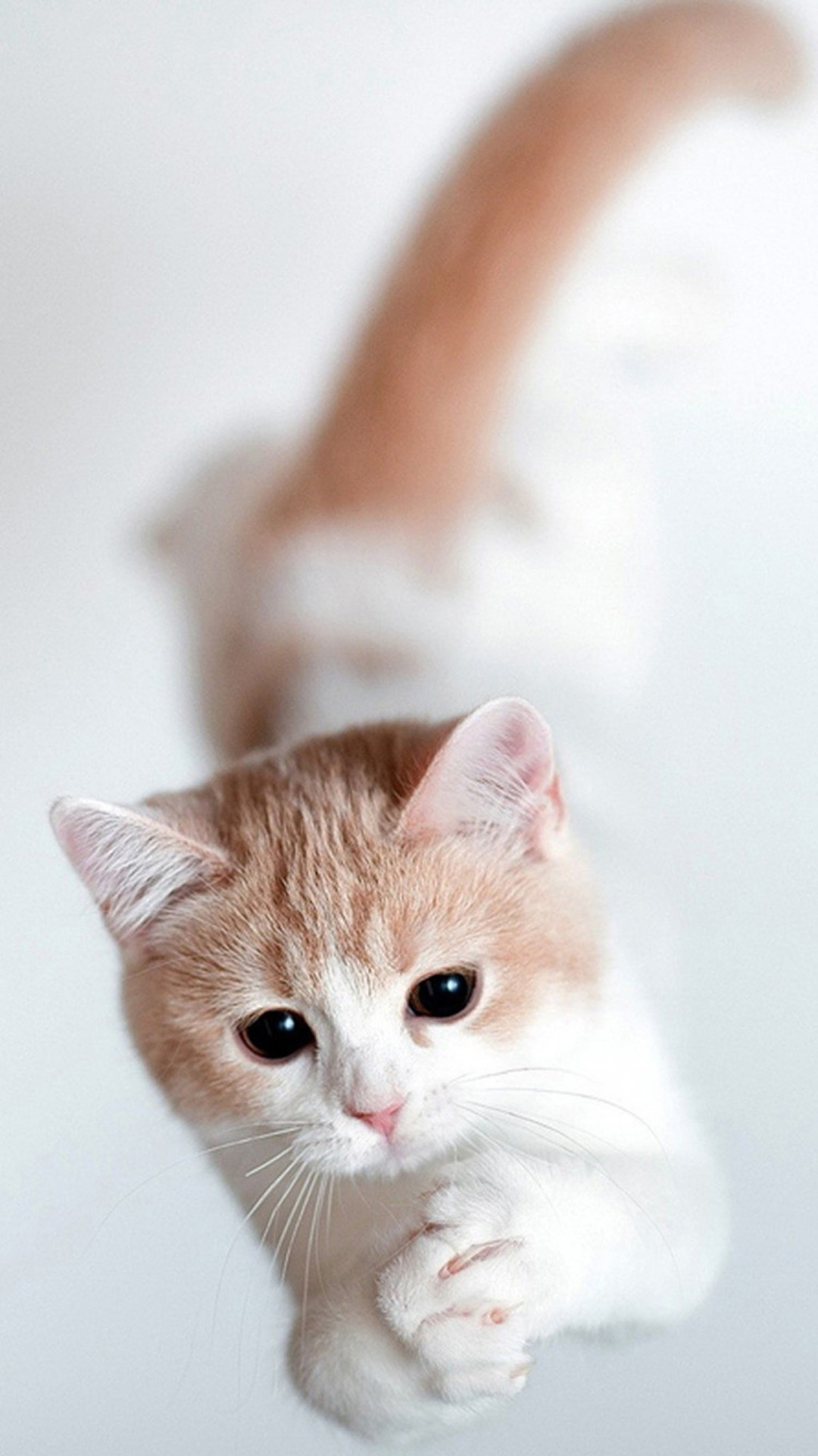 Wallpaper iphone cute cat - Two Cartoon Kitten