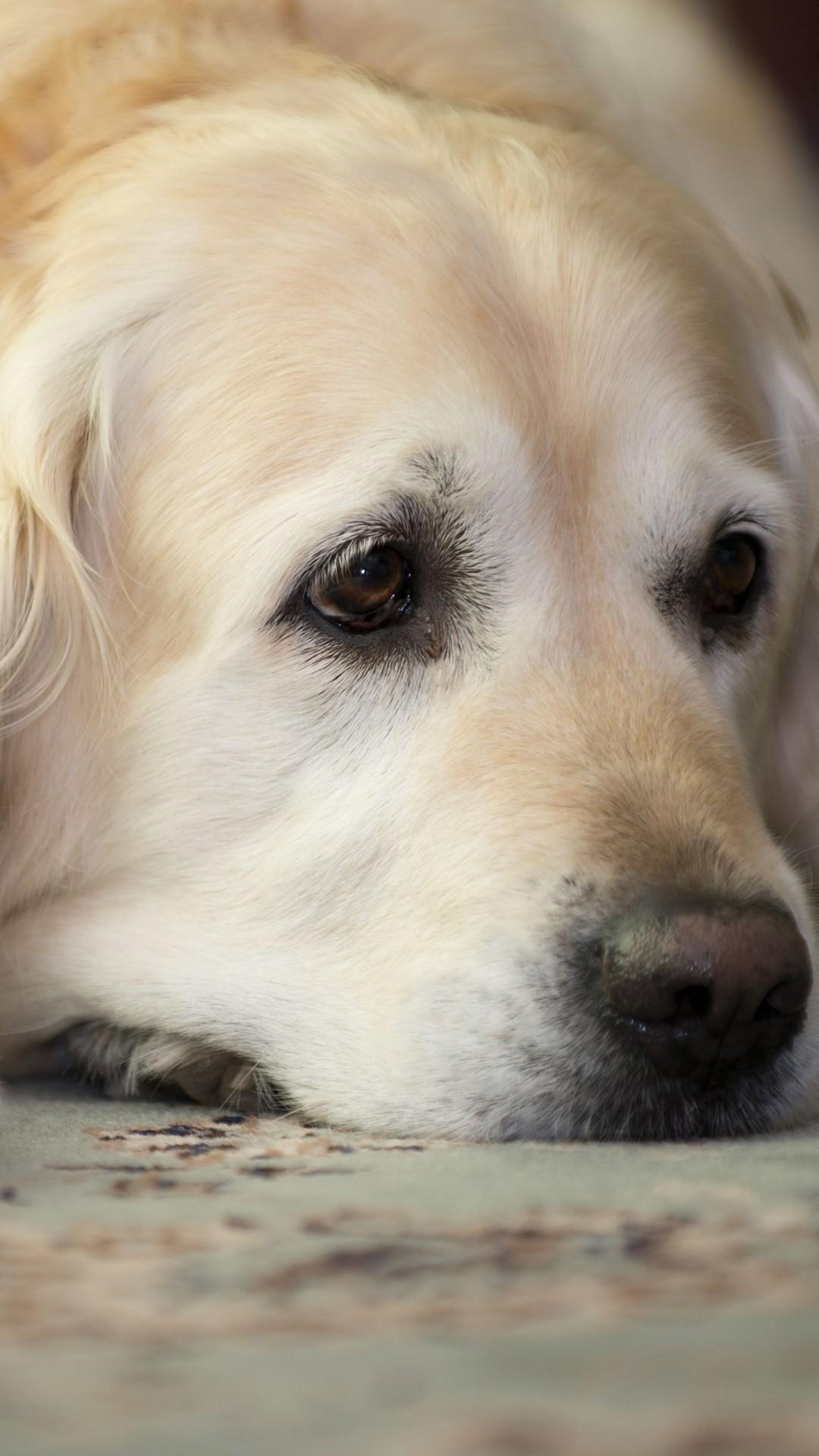 Cute Dogs HD Wallpaper...