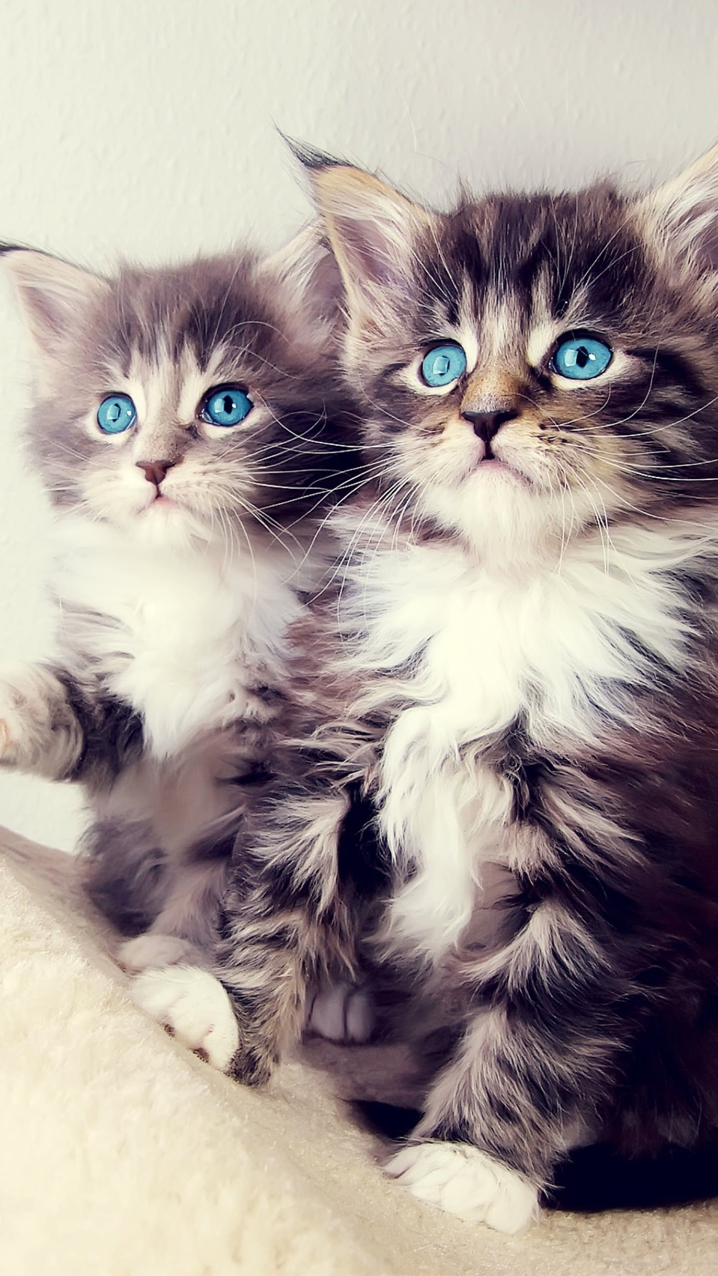 Cute Cats Hd Wallpapers For Htc 10 Page 3 Wallpapers Pictures