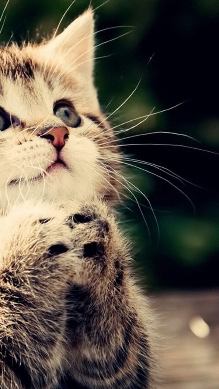 Cute Cats HD Wallpapers for Galaxy S3 | Wallpapers.Pictures