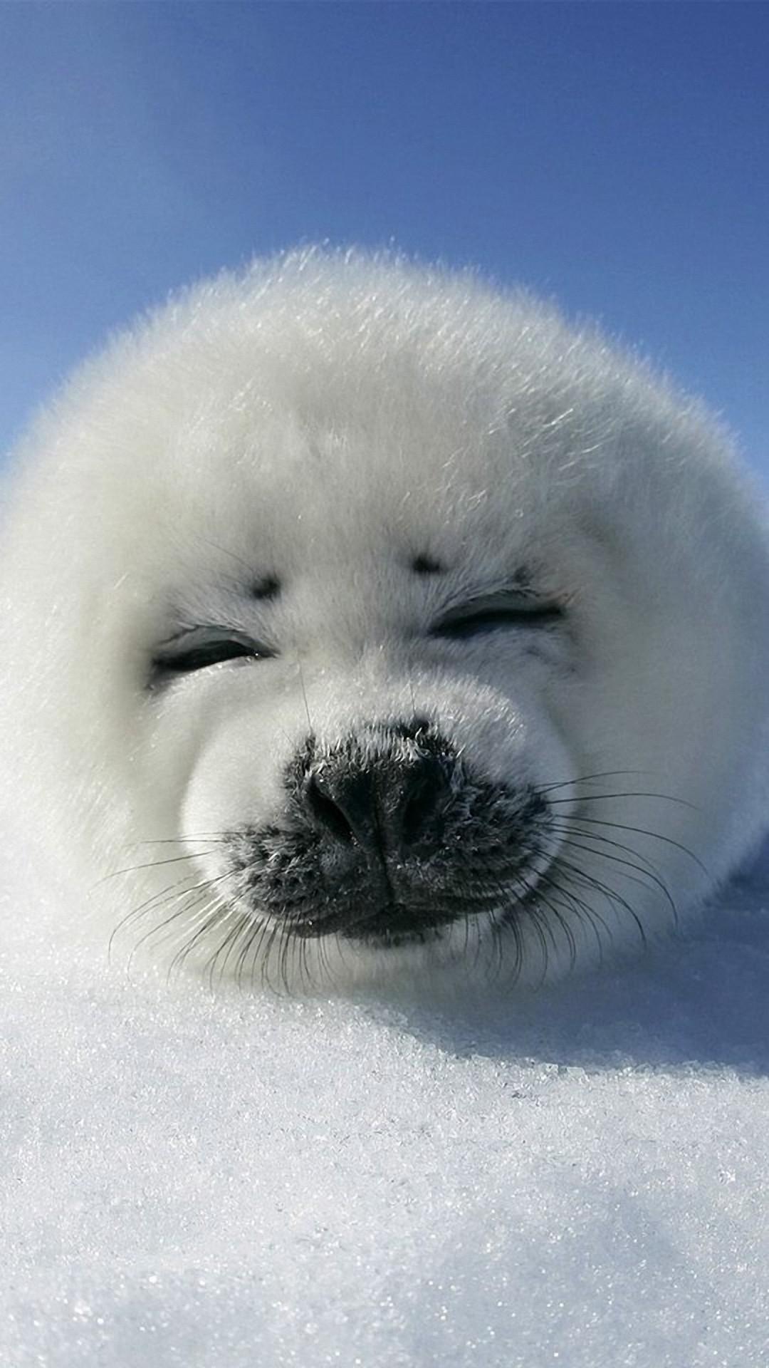 very cute polar puppy wallpaper background