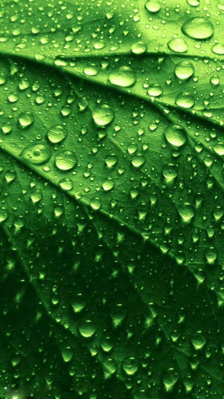 wet leaves wallpaper - photo #17