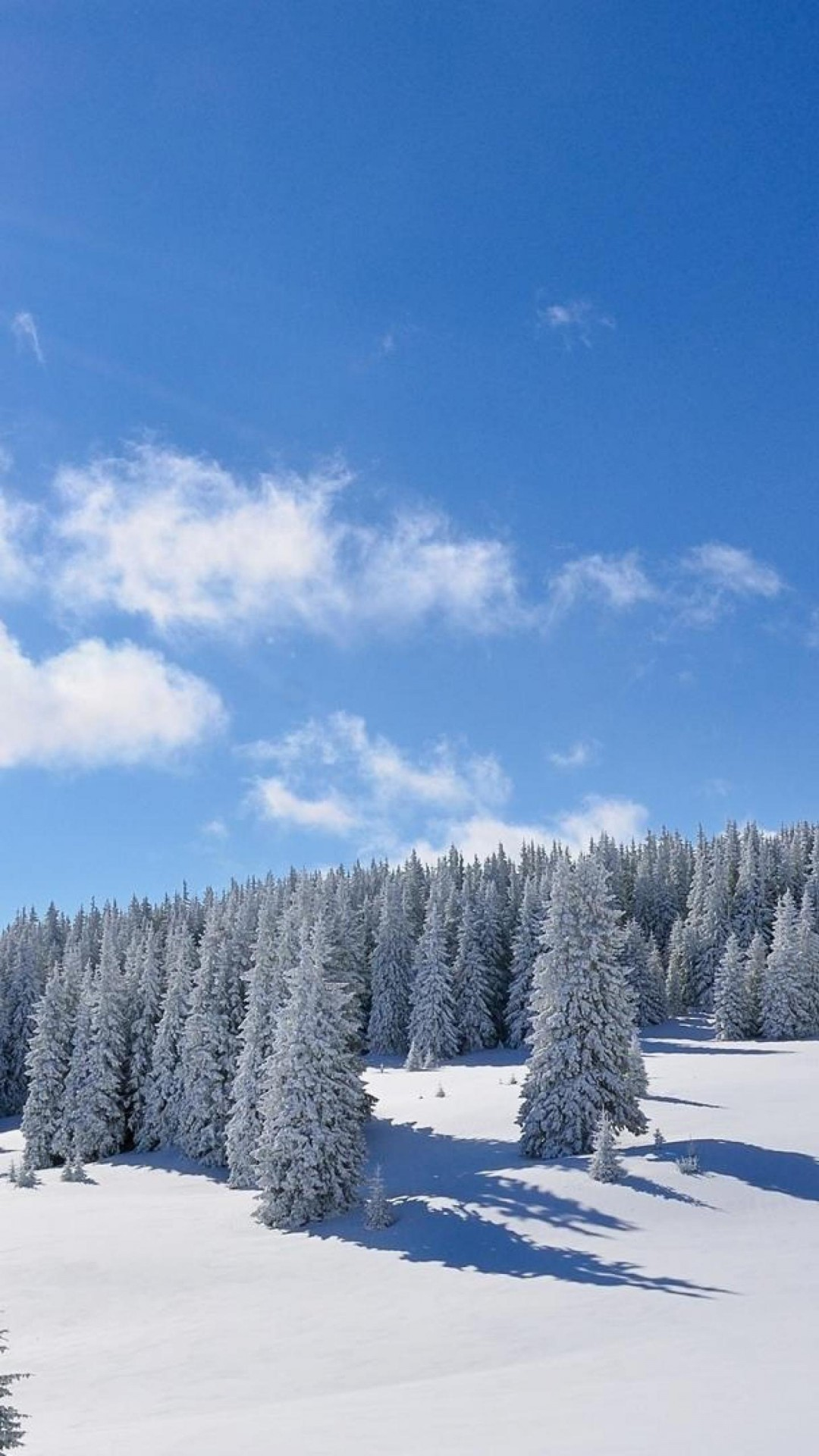 Winter Background Wallpapers on