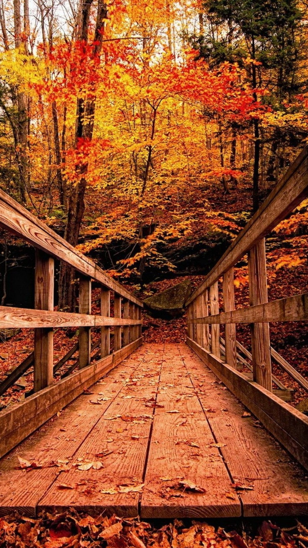 Good Fall Wallpaper For Iphone - wood-bridge-in-autumn-wallpaper-background-1080x1920  Photograph_74465.jpg